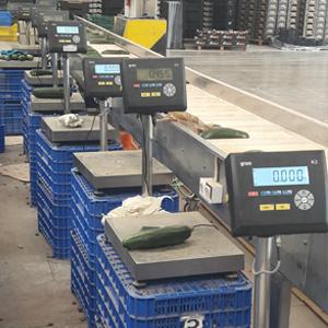 Báscula para el pesaje de hortalizas. Instalación y mantenimiento de básculas en la Región de Murcia
